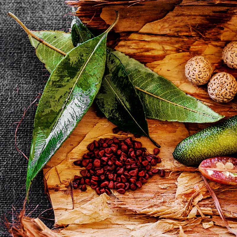 Tuck-in to Australia's Bush Ingredients