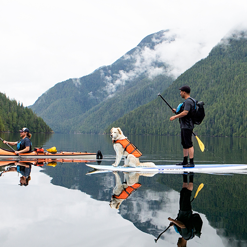 The Dogs of Clayoquot